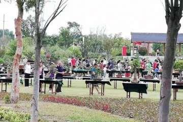 中秋假期 商丘公园有盆景艺术展