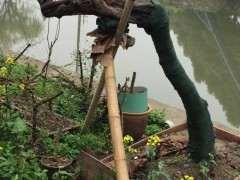 上百年的雀梅下山桩 几个月就死了