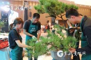 2019年 遵义国际盆景赏石大会