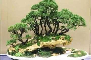 蚌埠35盆盆景将入世园会中国馆展出