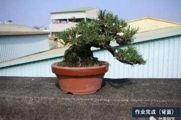 北京世园会蚌埠参展盆景作品启程