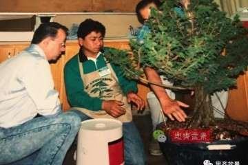 图解 一棵直干型柳杉盆景的培养历程