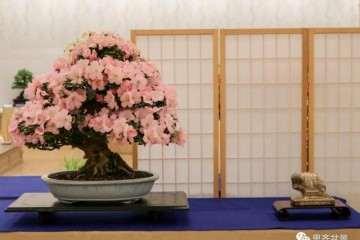 图解 日本皋月杜鹃怎么修剪养护的方法