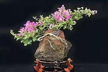 紫薇盆景怎么修剪整形的方法