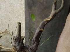 山桔下山桩怎么浇水种植的4个方法