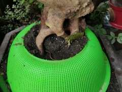 去年10月的下山桩生桩 到现在没发芽