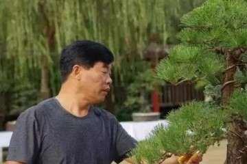 河南盆景艺术大师 吴德军老师