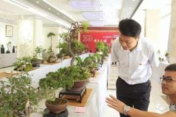 福鼎市国庆70周年福鼎盆景根艺作品展
