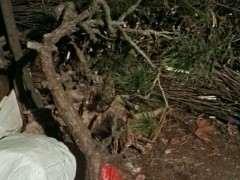 松树下山桩栽在门前 对风水有什么影响