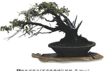 胡乐国盆景艺术研讨会在温州举行
