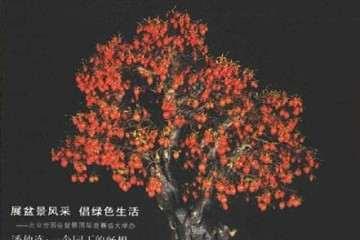 软迎玎阅2020年花木盆景杂志
