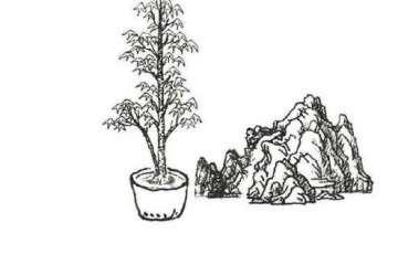 图解  石上树式附石盆景怎么制作