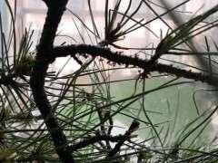 刚下山半个月松树下山桩上生虫子 图片