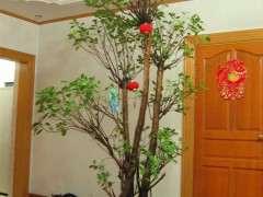 这棵榕树下山桩值多少钱 300元 贵吗