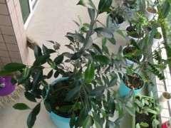 榕树下山桩种子怎么发芽长大的过程 图片