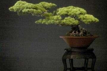 上海旺盛园艺专业从事盆景生产制作