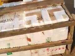赤楠下山桩在运输中怎么包装的方法 图片