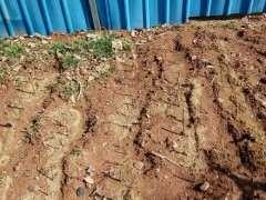 南方石榴下山桩怎么扦插的方法 图片