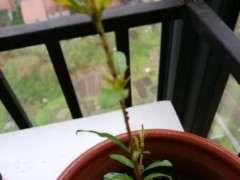 石榴下山桩根茎上有虫子 怎么办 图片