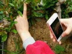 石榴下山桩可以用播种的方法繁殖吗