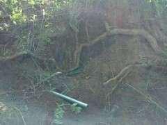 挖到一颗3米长的枸杞下山桩 怎么样 图片