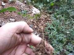 冬天榔榆下山桩可以室外过冬吗 图片