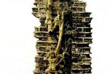 为什么岭南榕树作品特别吸引盆景人