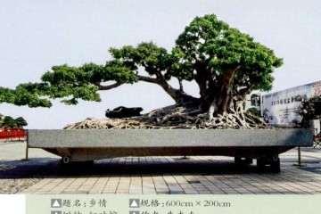 广东省盆景协会成立二十五周年会员展