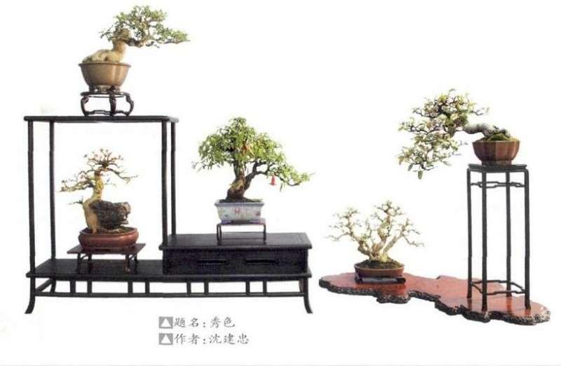 2019小品盆景博览会在新沂举办 图片