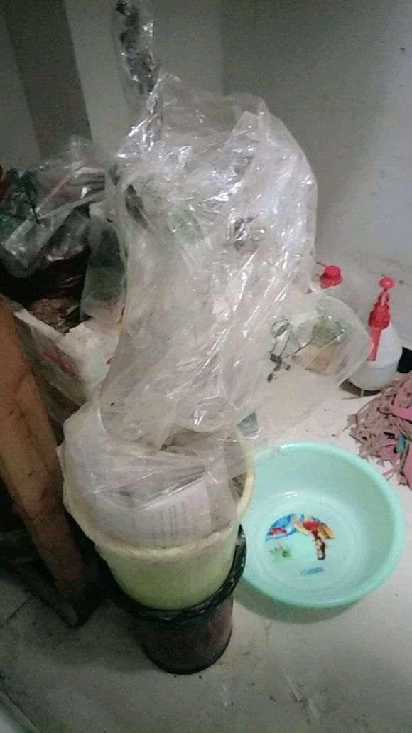香木下山桩怎么套袋发芽的方法 图片