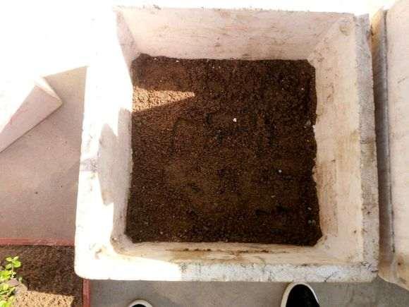 金豆下山桩怎么用颗粒沙栽培的方法 图片