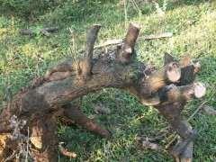 火棘下山桩用什么土壤栽 最好 图片