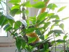 梅花下山桩子有30年了 还能出新芽吗