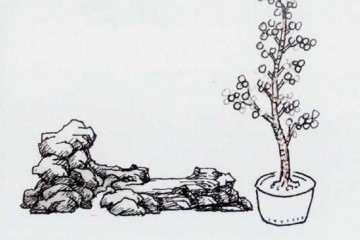 图解 石上文人式盆景怎么制作的方法