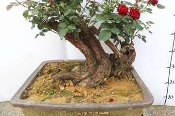 怎么盆栽才能有良好的种植效果 图片