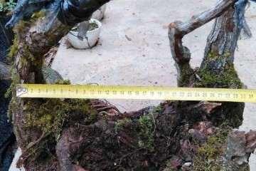 盆栽盆土怎么配制的方法 图片