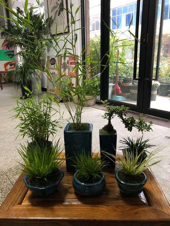 十多盆竹子菖蒲小盆景 怎么样 图片