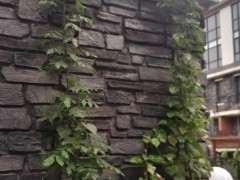 紫藤下山桩种了4年 长叶不开花 怎么办