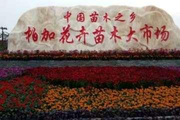湖南浏阳花卉盆景批发 有人合作吗 图片