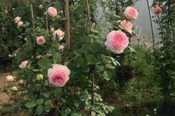 浙江盆景花卉 大量批发 欢迎求购 图片
