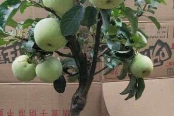 青州哪儿批发盆景的市场 图片