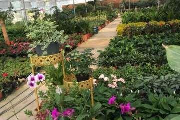 六安花卉盆景批发市场都在哪里
