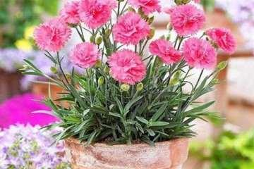 嘉兴哪里有盆景花卉批发市场 图片