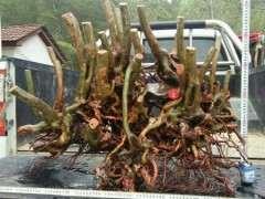 映山红丛林下山桩 重60斤 可以吗 图片