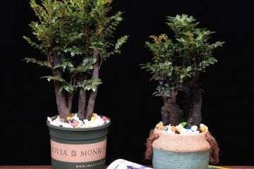 南充的盆栽批发市场在哪啊 图片