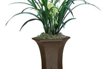 盆栽兰花怎么分株繁殖的方法 图片