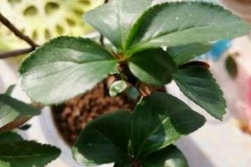 怎么根据盆栽花盆来浇水的方法 图片
