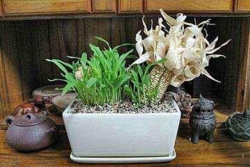 水稻盆栽速效氮淋洗法及短期亏氮效果分析