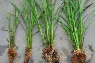 盆栽土壤怎么淋洗效果 最好 图片