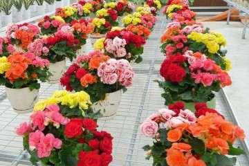 盆栽花卉怎么贮运保鲜的方法 图片